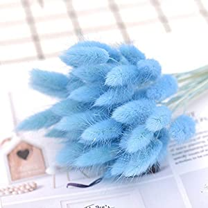 XGM GOU 50Pcs Dried Natural Flower Bouquets Colorful Lagurus Ovatus Bouquets&Uraria Picta&Rabbit Tail Grass Bouquets Bunches 71
