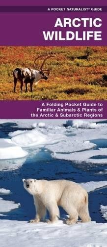 Arctic Wildlife: An Introduction to Familiar Species (A Pocket Naturalist Guide)