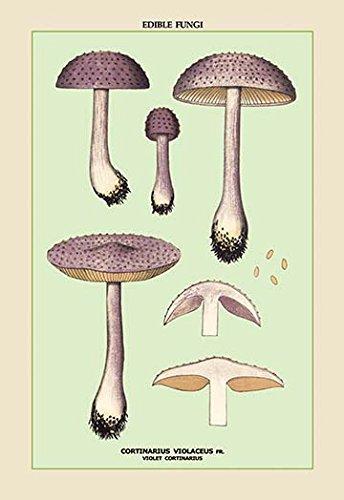 "Edible Fungi: Violet Cortinarius Fine Art Canvas Print (20""x30"")"