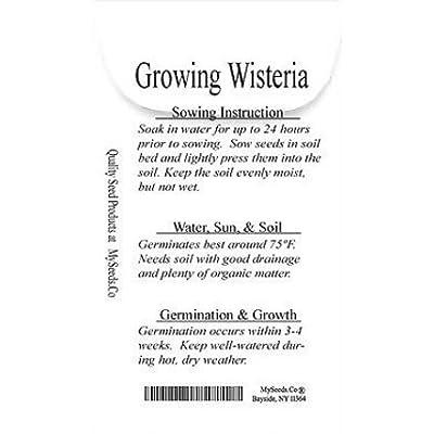 New Japanese Wisteria - Wisteria floribunda 5 Seeds - Longest Flower Racemes : Garden & Outdoor