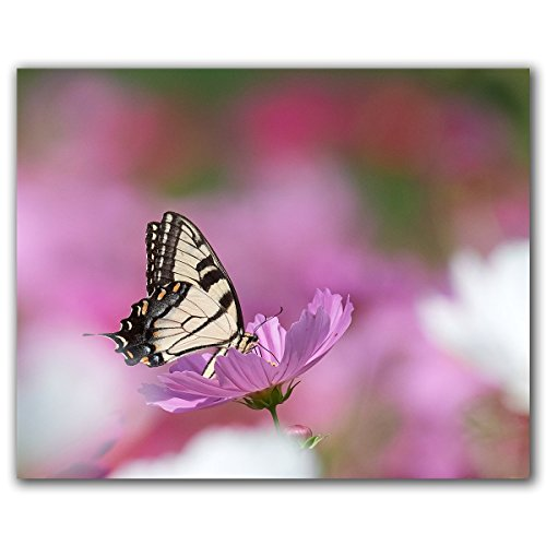 Butterfly on wildflower canvas wrap, original art photograph, ready to hang. by M. Kuznicki Photography