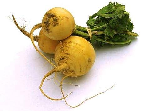 Heirloom Vegetable Seeds Certified Organic Non-GMO Organic Turnip Seeds APPR. 1,100 USA Purple Top White Globe Turnip Non Hybrid