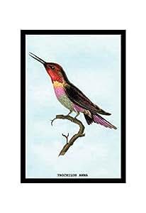 """Hummingbird: Trochilus Anna"" Print (Canvas 20x30)"