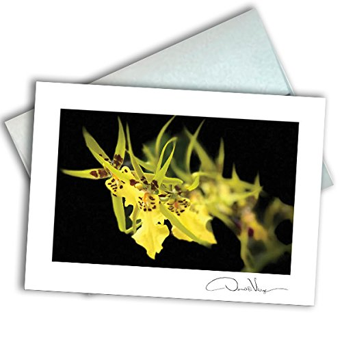 Single Yellow Flower Note Card. 3x5 Blank Card with Classy Envelope. Best Birthday Cards, Thank You Notes, Invitations. Unique Christmas, Mother's Day & Valentines Gifts for Women, Men, Kids
