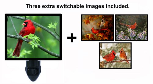 - Night Light w/Switchable Inserts - Cardinals/Birds