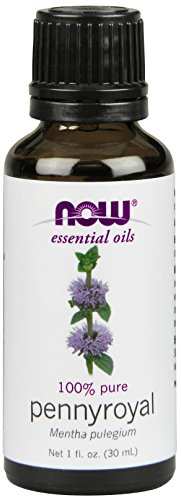 Now  Pennyroyal Oil, 1 Ounce