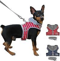 IN THE DISTANCE Suave Perro Pequeño Cachorro De Chihuahua Conjunto ...