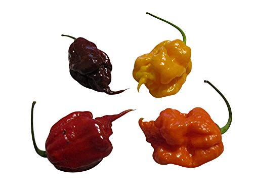 (Trinidad Scorpion Seeds Mix 30 Seeds -3 Color's- ***Hottest Pepper in the World*** ---Only Sell by Samenchilishop(World)---)