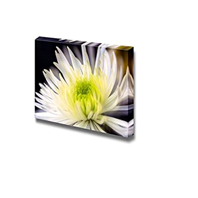Closeup of White Chrysanthemums Flower Wall Decor, With Expert Quality, Elegant Artistry
