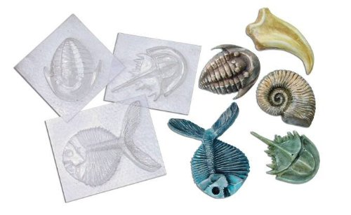 Molds Fossil