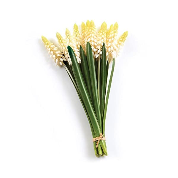 MUSCARI HYACINTH BUNCH, WHITE, 11-INCH