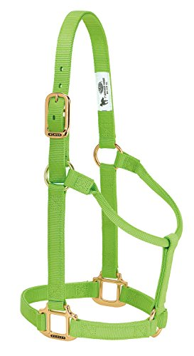 Weaver Leather Original Non-Adjustable Nylon Horse Halter, Small, Lime Zest