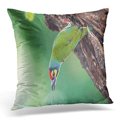Aportt Yitlon8 Throw Pillow Cover Bird Coppersmith Barbet Crimson Breasted Megalaima Haemacephala Yellow Green Decorative Pillow Case Home Decor Square 18
