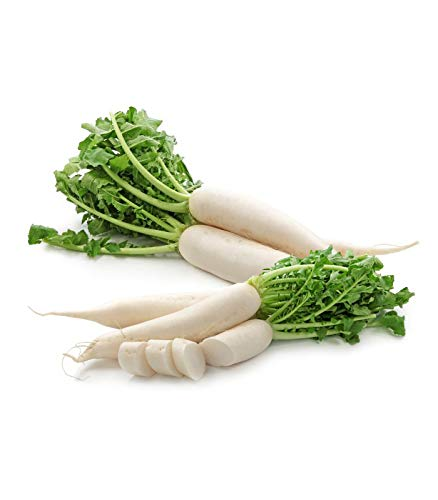 Radish (mooli) Vegetables Seed (Pack of 50 Seed 1 per pkts) 1 of Radish ()
