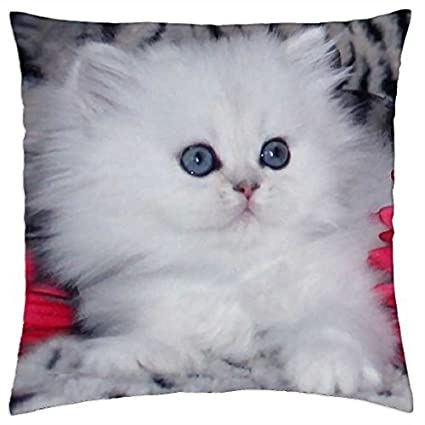 a44a88d030 Image Unavailable. Image not available for. Color  Beautiful White Kitten  ...
