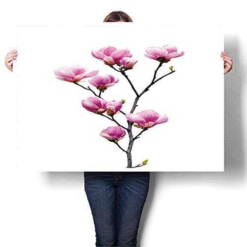 SCOCICI1588 1-Piece 100% Paintings Pink Magnolia Flowers Isolated on White Background Oils,52