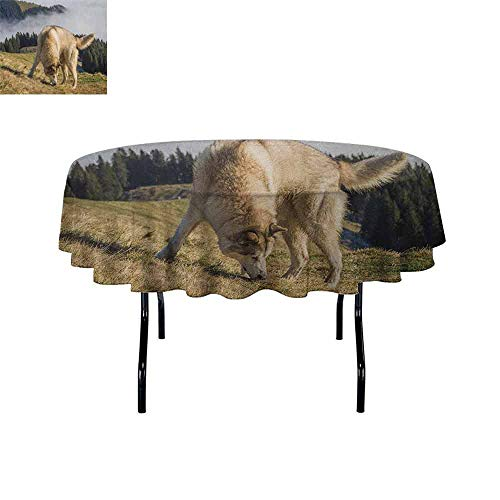 - Alaskan Malamute Easy Care Leakproof and Durable Tablecloth Purebred Dog Foggy Mountains Trees Faithful Companion Outdoor Picnic D47 Inch Pale Brown Dark Green Beige