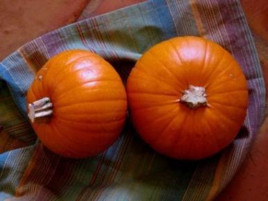David's Garden Seeds Pumpkin Small Sugar PUM317YR (Orange) 25 Organic Heirloom Seeds