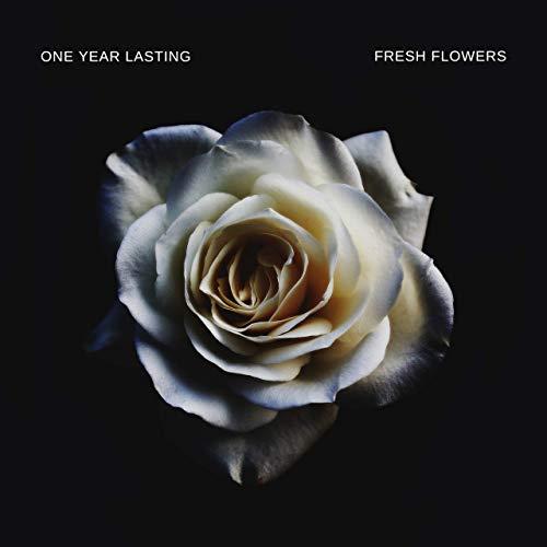 Premium Roses  Model Black  Real Roses That Last 365 Days  Fresh Flowers (Black Box, Large) by Premium Roses (Image #2)