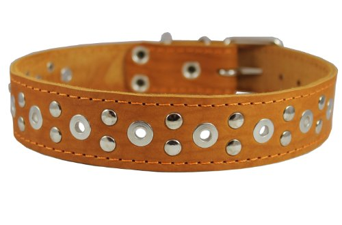 Dogs My Love Genuine Leather Studded Dog Collar 22