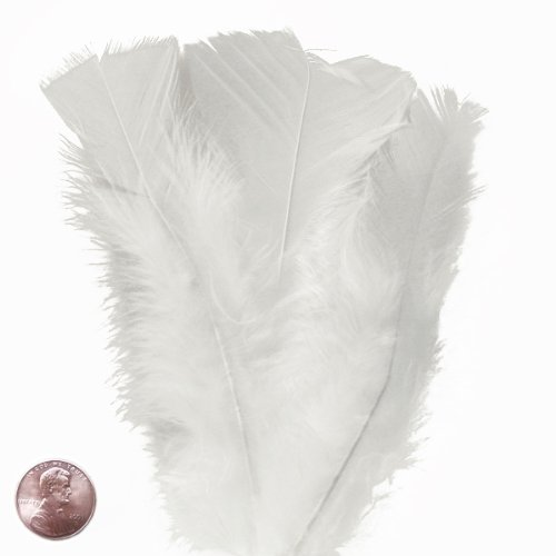Turkey Flat Feathers - 2