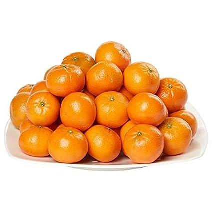 Amazon.com: Espera más clementinas 5 lb: Jardín y Exteriores