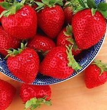 Have one to Sell? Sell Now - Have one to Sell? Details About Tristar Everbearing Strawberry 25 Bare Root Plants - Sweetest & Most Aromatic by Hirt's Gardens