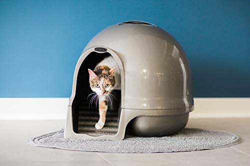 Buy cat litter box reviews best litter box