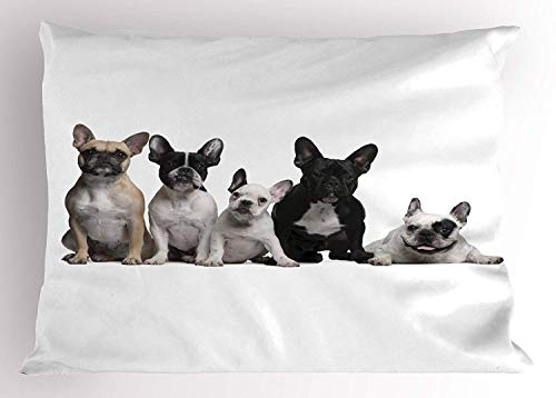 Carmen A Bulldog Pillow Sham by, Group of Young French Bulldogs with Adorable Expressions Animal Lover Photo, Decorative Standard Queen Size Printed Pillowcase, 30 X 20 inches, Black White Beige - Home Expressions Standard Sham