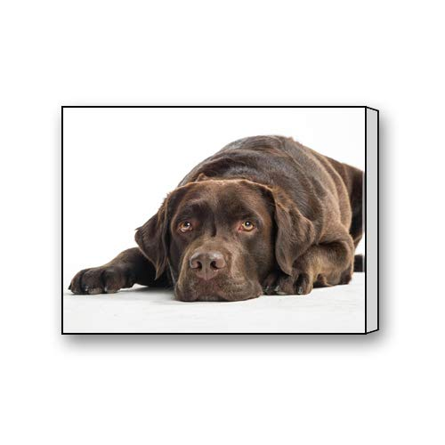 Chocolate Labrador Puppy Custom Canvas Print Personal Photos Print on Canvas Ready to Hang on Your Wall as a Modern Art 12
