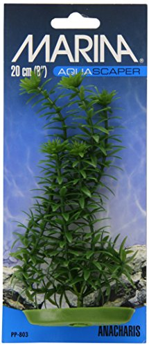 Aquascaper Anacharis, 8-Inch