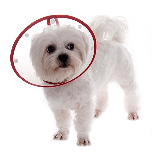 Cute Pet Dog Cat Recovery Collars Wound Healing Medical Funnel Cover Anti Bite Protective Collar Tool 4 Sizes Available Dot Style Random Color