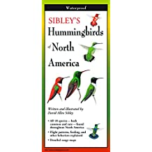 Sibley's Hummingbirds of North America -