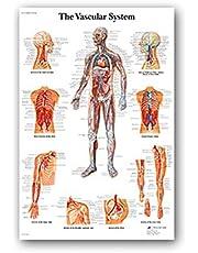 "Human Body Grafiek 24"" X 35"" Human Anatomy Art Silk posters Body Map Muur Pictures for Medical Education, patroon als de eerste Picture"