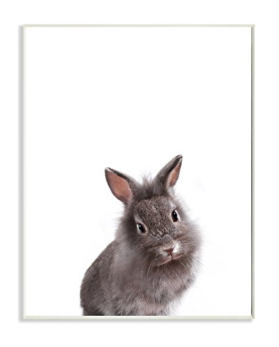 Stupell Home Décor Baby Bunny Studio Photo Wall Plaque Art, 10 x 0.5 x 15, Proudly Made in USA -