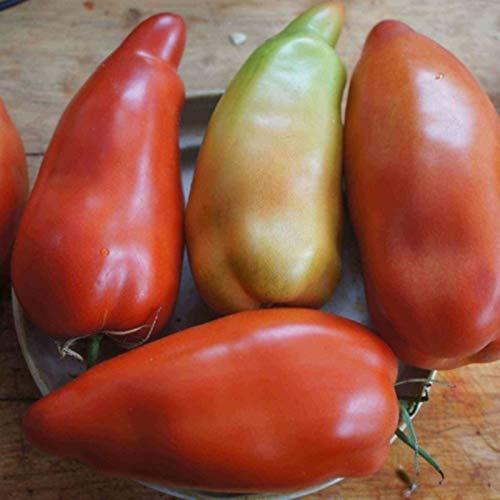 NIKITOVKASeeds - Tomato Howard German - 40 Seeds - Organically Grown - Non GMO ()