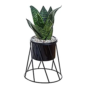 Foerteng - Macetas geométricas, marco de hierro, maceta de cerámica verde suculenta