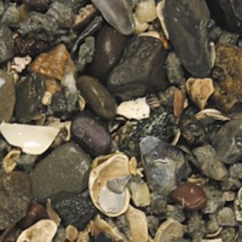 Carib Sea ACS00773 African Cichlid Live Gravel for Aquarium, 2/20-Pound by Carib Sea B00BUFVKNU