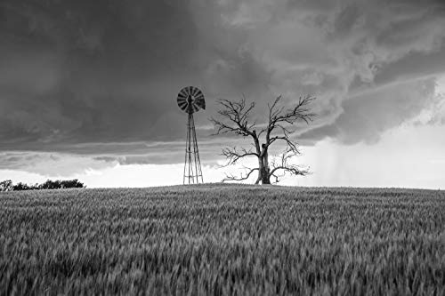Country Photography Wall Art Print - Black and White Picture of Windmill and Dead Tree in Wheat Field with Incoming Storm in Oklahoma Farmhouse Decor 5x7 to 40x60 Black White Landscape Photographs