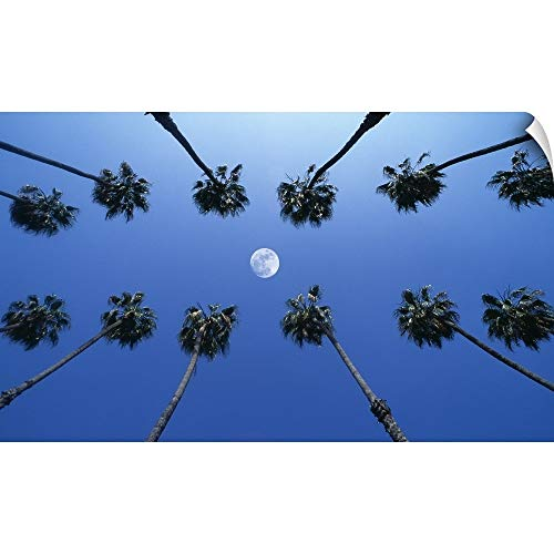 Canvas on Demand Wall Peel Wall Art Print Entitled Moon Between Rows Palm Trees, Hollywood, Los Angeles, California, USA 72