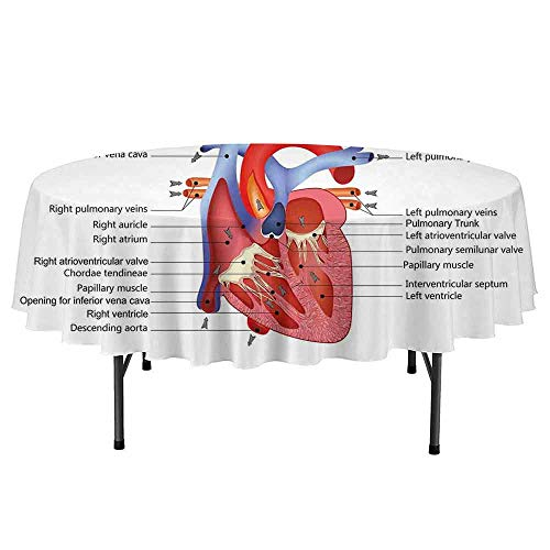 Douglas Hill Educational Waterproof Anti-Wrinkle no Pollution Medical Structure of The Hearts Human Body Anatomy Organ Veins Cardiology Round Tablecloth D47 Inch Coral Red Blue