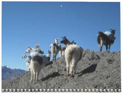 Llama Calendar - Best South America Images in Snow Capped Andes Mountains of Bolivia and Peru Photo #7