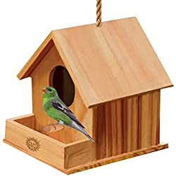 Wooden DIY Birdhouse for Kids - Fun Color Activity - Double Entrance for Easy Cleaning - Small Perch for Birds to sit on - Easy to Hang - Durable Material - Great for School Projects