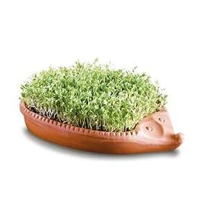 Römertopf - Germinador para semillas (arcilla), diseño con forma de erizo