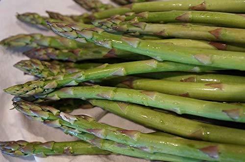Asparagus Mary Washington Seeds Save Farm Bulk 172C (3200 Seeds)