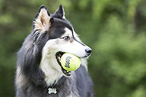 The 8 best balls for dogs