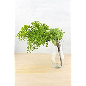 "Richland Fern Bush 18"" Artificial Maidenhair 25"