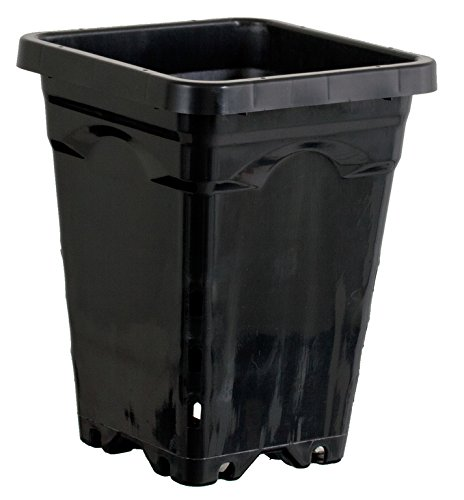 Active Aqua HG5X5SB 5'' by 5'' Square Tall Pot (Case of 100), 7'', Black
