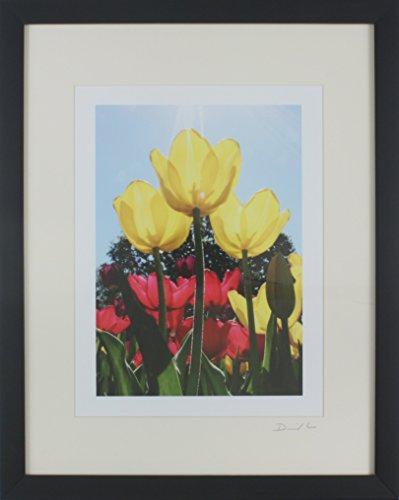 (Disneyland - Main Street Town Square Three Yellow Tulips Framed Matted Photo - 11 x 14)