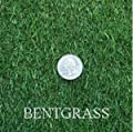 Creeping Bent Grass Seeds, 1 Pound